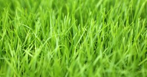 What kind of grass is best for your sports centre?